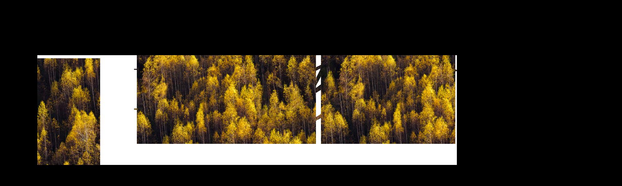 Brigitte Bellet